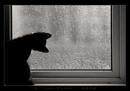 kucing-hujan